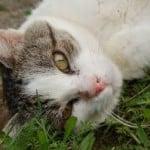 lovely_cat
