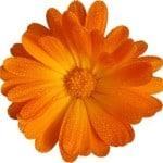 work-at-home-orange-flower