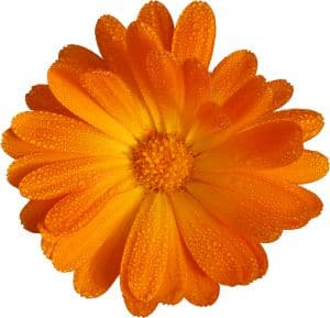 work-at-home-orange-flower