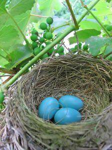 bird's-nest