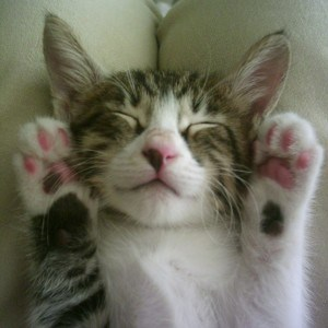 cat-with-paws-up