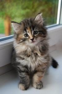 kitty-in-window
