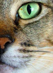 green_cat_eye_image