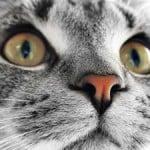 cat-eyes-image