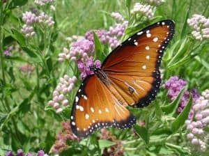 orange-butterfly-image