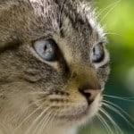 cat-profile-image