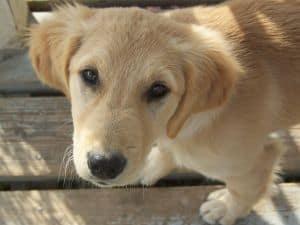 puppy-sad-eyes-image