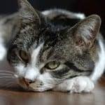 sleepy-cat-circle-image