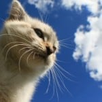 white-cat-clouds-image
