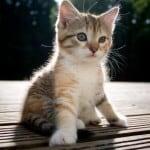 kitten-in-sun-image
