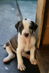 sweet-spotted-puppy-image