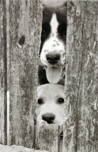 peeking-puppies-image