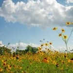 field-of-yellow-image
