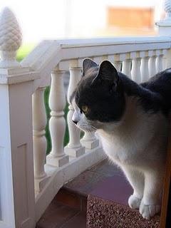 cat-in-the-garden-image