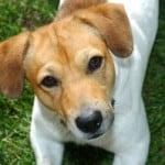 sweet-doggie-face-image