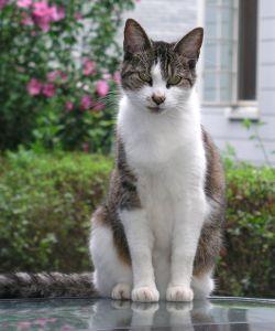 serene-cat-image