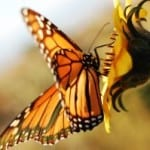 bright-orange-butterfly-yellow-flower-image