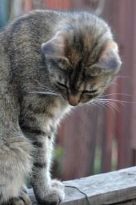 cat-farm-image
