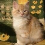 cat-portrait-image