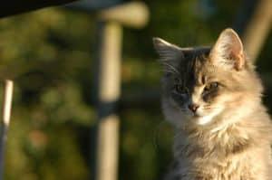 cat-in-sun-image