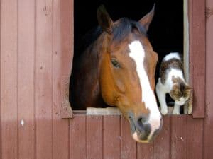 barn-window-friends-image