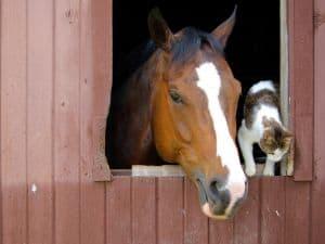 barn-window-friends-image