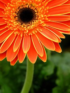 WAHMRevolution-flower-orange-image
