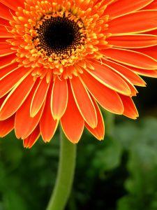 WAHMRevolution-flower-orange-image