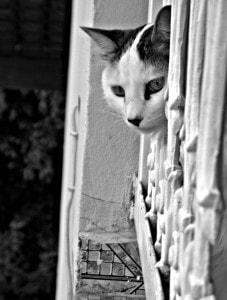 cat-peeking-doorway-image
