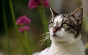 gray-white-cat-flower-image