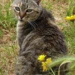 cat-over-the-shoulder-image