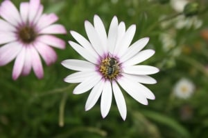 purple-white-flowers-field-image