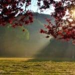 fall-light-trees-scene