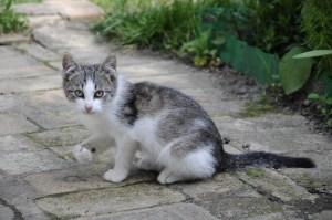 gray-cat-walkway-image