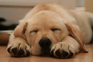 cutie-puppy-image