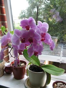 purple-orchids-window-image