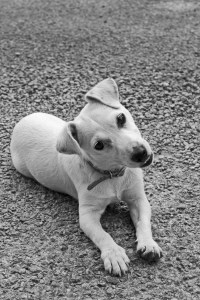 cute-curious-dog-terrier-image