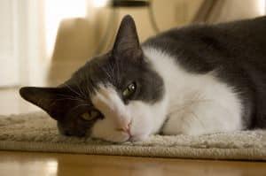 kitty-sleep-image