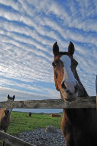 horse-clouds-sky-fence-image