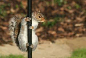 squirrel-on-pole-image