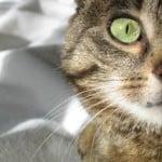 cat-hiding-image