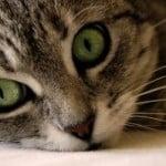 cat-green-eyes-closeup-image