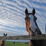 horsie-blue-sky-image