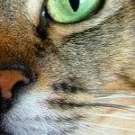 very-close-up-green-cat-eye-image