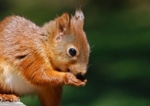 squirrel-snack-image