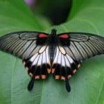 butterfly-green-leaf-fan-image