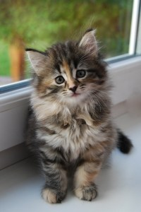 cute-kitty-by-window-image