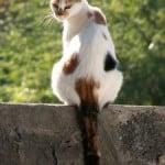tortoise-shell-cat-fence-image