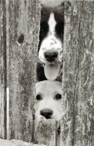 peekaboo-puppies-image
