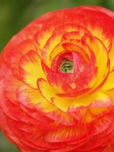 beautiful-orange-yellow-flower-image